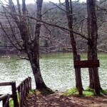 forestaumbra(1)